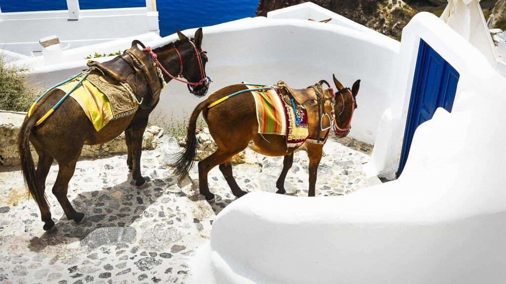 Wedding Planner in Santorini Unique Wedding Transport 91
